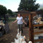 Michaelmas Feast geese & chef