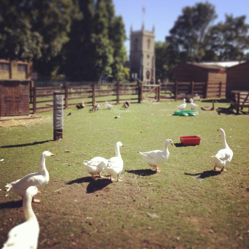 setting of animal farm